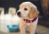 На Филиппинах собака спасла ребенка от кобры ценой жизни