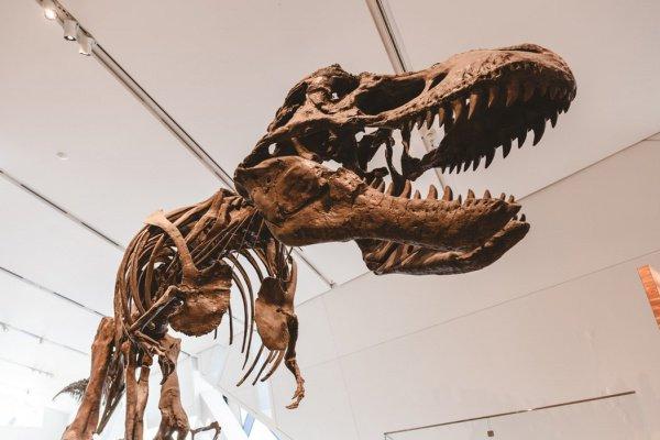 В соответствии с мнением палеонтологов, находка могла принадлежать ящеру, достигавшему 8 м в длину (Фото: Adam Muise/Unsplash)