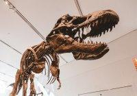 Во Франции нашли 2-метровую кость динозавра (ВИДЕО)
