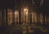 Раскрыты секреты выживания в лесу
