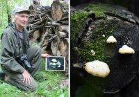 В России найден неизвестный науке гриб