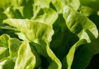 Ученые изменят гены растений, чтобы спасти Землю