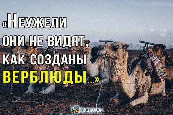 Верблюд - знамение Аллаха для размышляющих