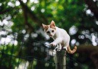 Массовая гибель котов произошла в Москве