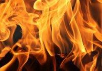 Обнаружена причина небывалых пожаров в России