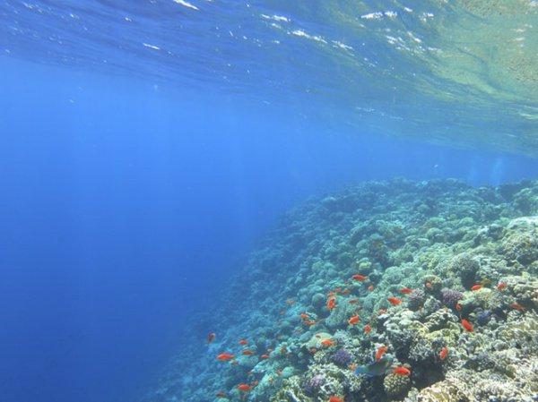 Наиболее масштабные обесцвечивания кораллов начались в 2016 году — тогда пострадало более 1000 км Большого барьерного рифа (Фото: Nathalie Hurova/Unsplash)