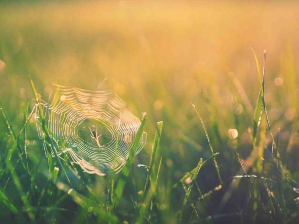 Паук – насекомое, которое спасло жизнь Пророку Мухаммаду (мир ему)