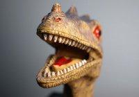 В Китае впервые нашли след тираннозавра