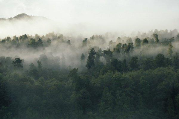 Каждый год огнем уничтожается порядка 10 млн. гектаров леса (Фото: Tobias Tullius/Unsplash)