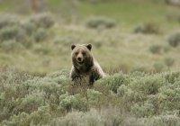 В Канаде турист отбился от медведя гризли