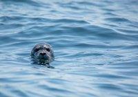 В Калининграде вылечили и выпустили в море 2 тюленей