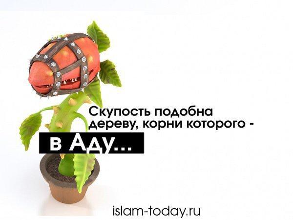 """""""Скупость подобна дереву, корни которого находятся в Аду..."""""""