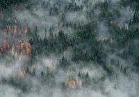 Дожди не спасут леса Сибири от пожаров