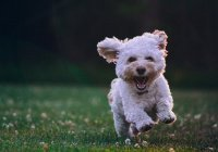 В США женщина лишилась рук и ног, когда ее лизнула собака