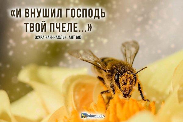 Пчела – чрезвычайно интересное и удивительное насекомое.