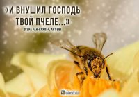 Интересные факты о пчёлах, в которые очень сложно поверить