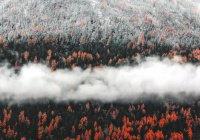 Названы насекомые, которые рады лесным пожарам