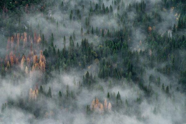 Прежде причиной большинства пожаров называли отсутствие осадков, жаркую погоду и сухие грозы