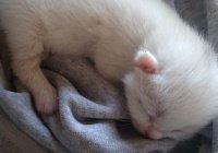 Котенок с редкой мутацией родился в Новосибирске