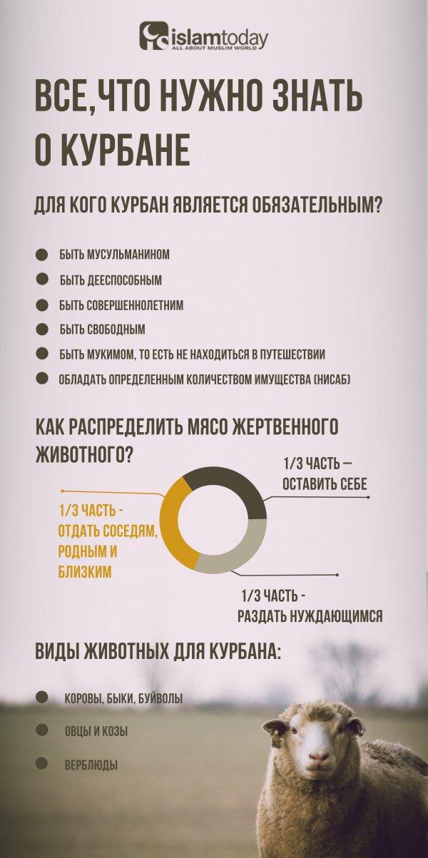 Все, что нужно знать о Курбане, в одной картинке (Инфографика)