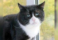 В Москве обнаружен самый печальный кот