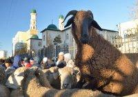 В Подмосковье для жертвенного забоя животных в Курбан-байрам подготовлено 11 площадок
