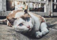 Десятки кошек отравлены в Японии