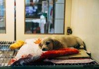 В Костроме девочка отдала алименты отца приюту для животных