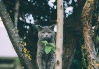 Перечислены самые популярные породы кошек в России
