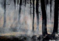 Названы объемы выбросов СО2 от лесных пожаров в Сибири