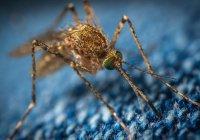 Выявлена самая «вкусная» группа крови для комаров