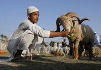В Саудовской Аравии для хаджиев приготовили миллион жертвенных баранов