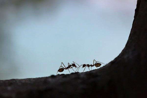 На кадрах видео полчище крылатых насекомых, кружащееся в небе