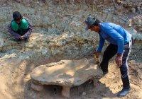 В Бразилии найдены останки древней рептилии