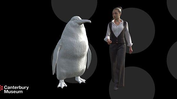 Эта вымершая птица практически на 40 см выше крупнейшего современного пингвина - императорского, рост которого составляет 120 см
