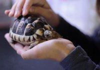 Полицейские в России больше месяца выхаживали 4 тыс. черепах