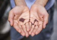 Великая награда ожидает тех, кто посеет эти семена