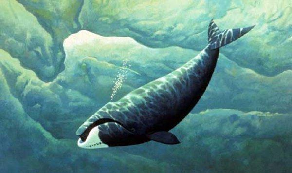 Чрево этой рыбы стало мечетью для одного из пророков…