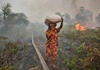 В Индонезии искусственно вызовут дождь для борьбы с пожарами