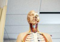 Ученые научились «печатать» человеческие органы с патологиями