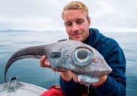 В Норвегии выловили рыбу с аномальными глазами