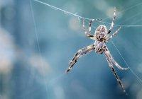 В Великобритании пожаловались на нашествие пауков