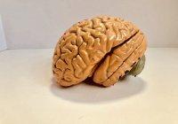 Названы признаки развития рака мозга