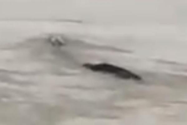 Существо заметили вблизи крупнейшей в мире гидроэлектростанции «Три ущелья» в провинции Хубэй (Кадр: Mirror/Pear Video)