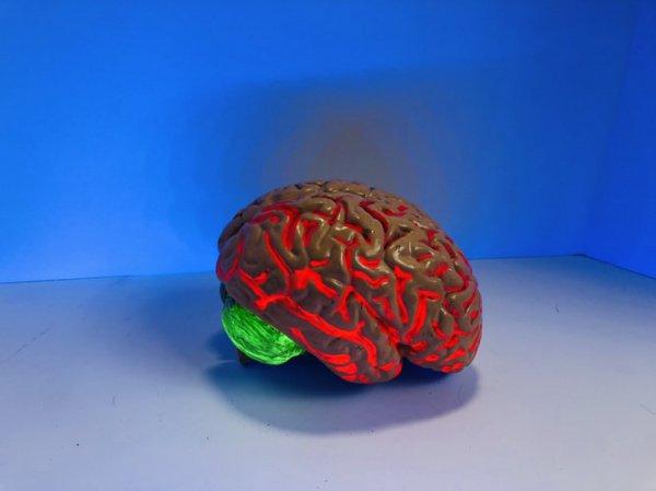 Докозагексаеновая кислота – наиболее распространенная жирная кислота в головном мозге млекопитающих