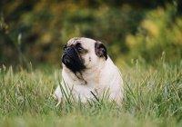 Выяснилось, у каких людей бывают собаки с избыточным весом