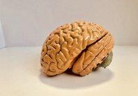 Выявлены первые признаки опухоли мозга