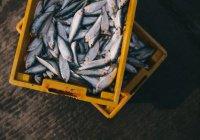 Биопластик из рыбных отходов создали в Великобритании