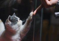 Ученые сделали неожиданное открытие о кошках