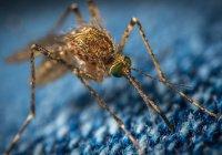 Жительница Великобритании расчесала комариный укус и осталась без ног